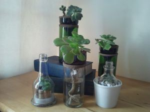 Self Watering Reclaimed Bottle Planters