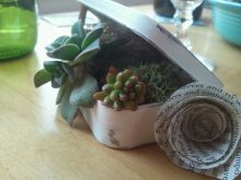 """Pocket"" sized mini succulent gardens."