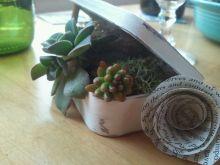"""Pocket"" sized mini succulent gardens."