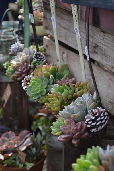 Succulents in Ladles