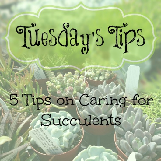 Tuesdays Tips succulents